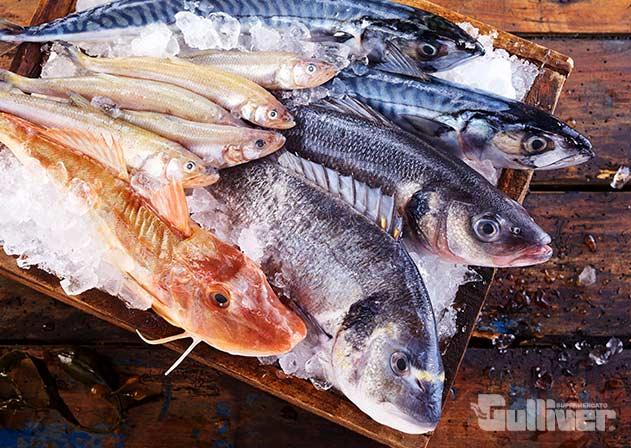 pesce-fresco-gulliver